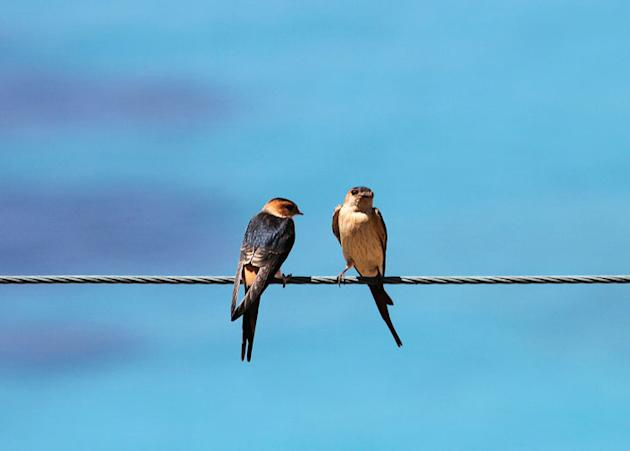 Birds perch on a wire at a beach in Llaman near the city of Vlore Arben Celi / Reuters