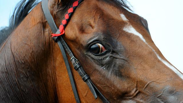 Equestrian - Rider dies after fall at Somerford