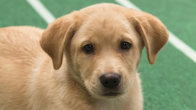 Puppy Bowl IX - Animal Planet