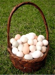 How your Email Archive is Not a One Basket Solution image eggs basket