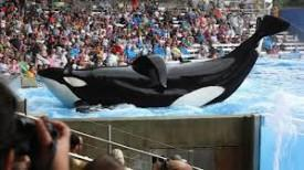 CNN Wins Timeslot In News Demo With 'Blackfish'