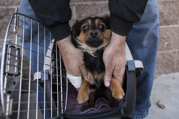 A dog at Front Street Animal Shelter is loaded into a crate in Sacramento