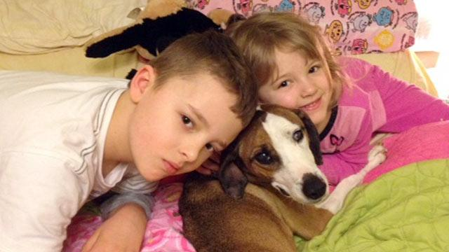 One-Eyed Dog Returns Home to Family Two Years Later -