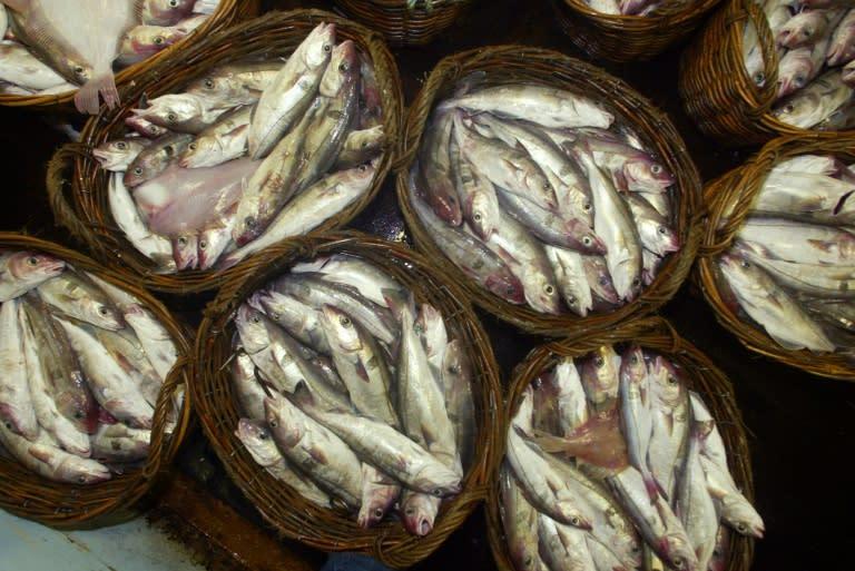 Plancton diezmado, peces espantados por contaminación sonora de origen humano
