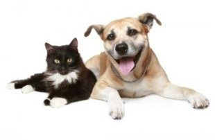 Believe it or not, pets have a healing effect on their owners!