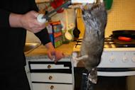 This 16-inch home-invading rat is a thing of nightmares