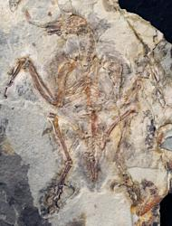 The fossil was so well-preserved that some of the stomach contents were still present