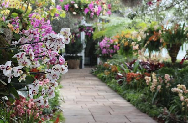New York Orchid Show Movie Search Engine At