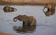 A herd of elephants gather at a watering hole inside Hwange National Park, about 840 km (521 miles) outside Harare, October 28, 2013. REUTERS/Philimon Bulawayo