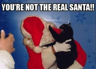 10 Animals Who Refuse To Get Into The Christmas Spirit image cat 22.jpg2