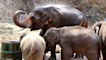 Elephant camp receives huge donation amid COVID-19 pandemic
