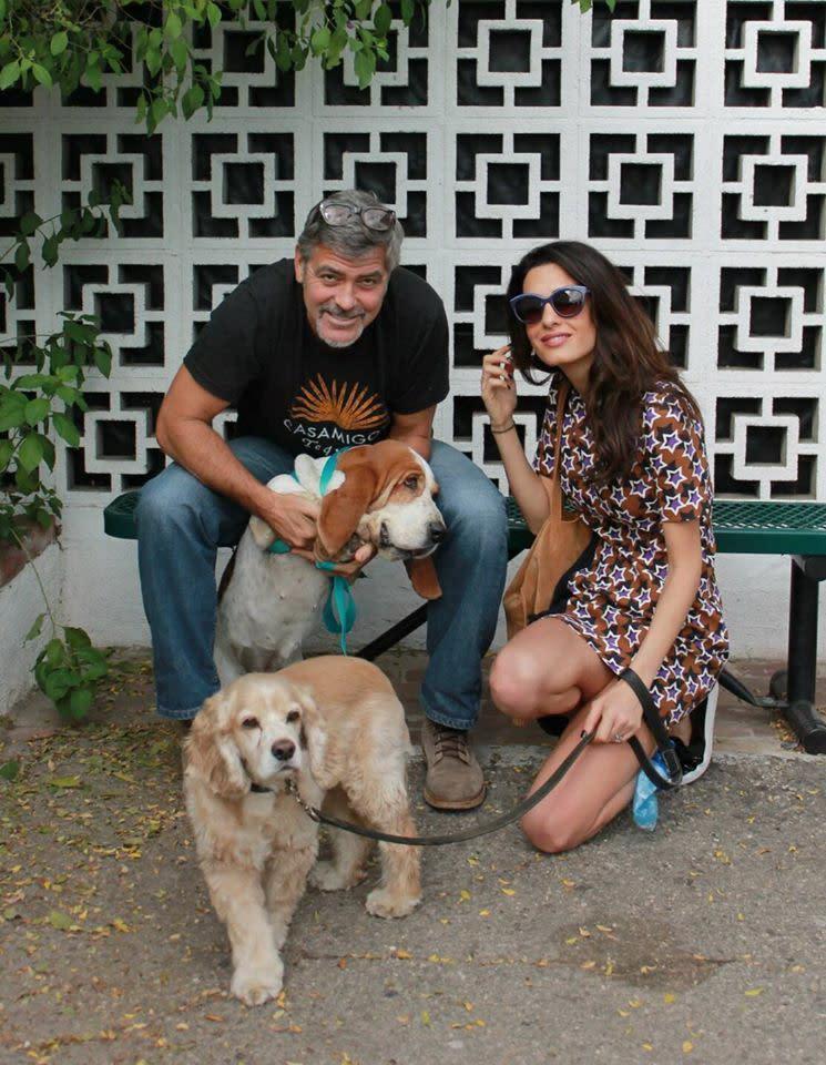 <p>五、喬治克隆尼(George Clooney):好萊塢性感熟男喬治克隆尼也是愛狗一族,家中領養了三隻狗。但喬治克隆尼最知名的寵物,莫過於他年輕時養的一隻寵物豬麥斯(Max),養了十八年後在2006年過世。喬治克隆尼稱自己和麥斯是「維持最久的一段關係」。而他領養的第一隻黑色可卡犬愛因斯坦(Einstein),則是在即將遭到安樂死的數小時,幸獲喬治克隆尼收養而逃過一劫,成為備受主人寵愛的幸福狗狗,更曾在2015年與喬治克隆尼一同合拍歐米茄廣告。(圖:Yahoo US) </p>