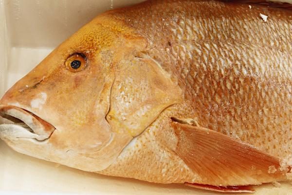 Ciguatera fish poisoning more common than thought yahoo news for Ciguatera fish poisoning
