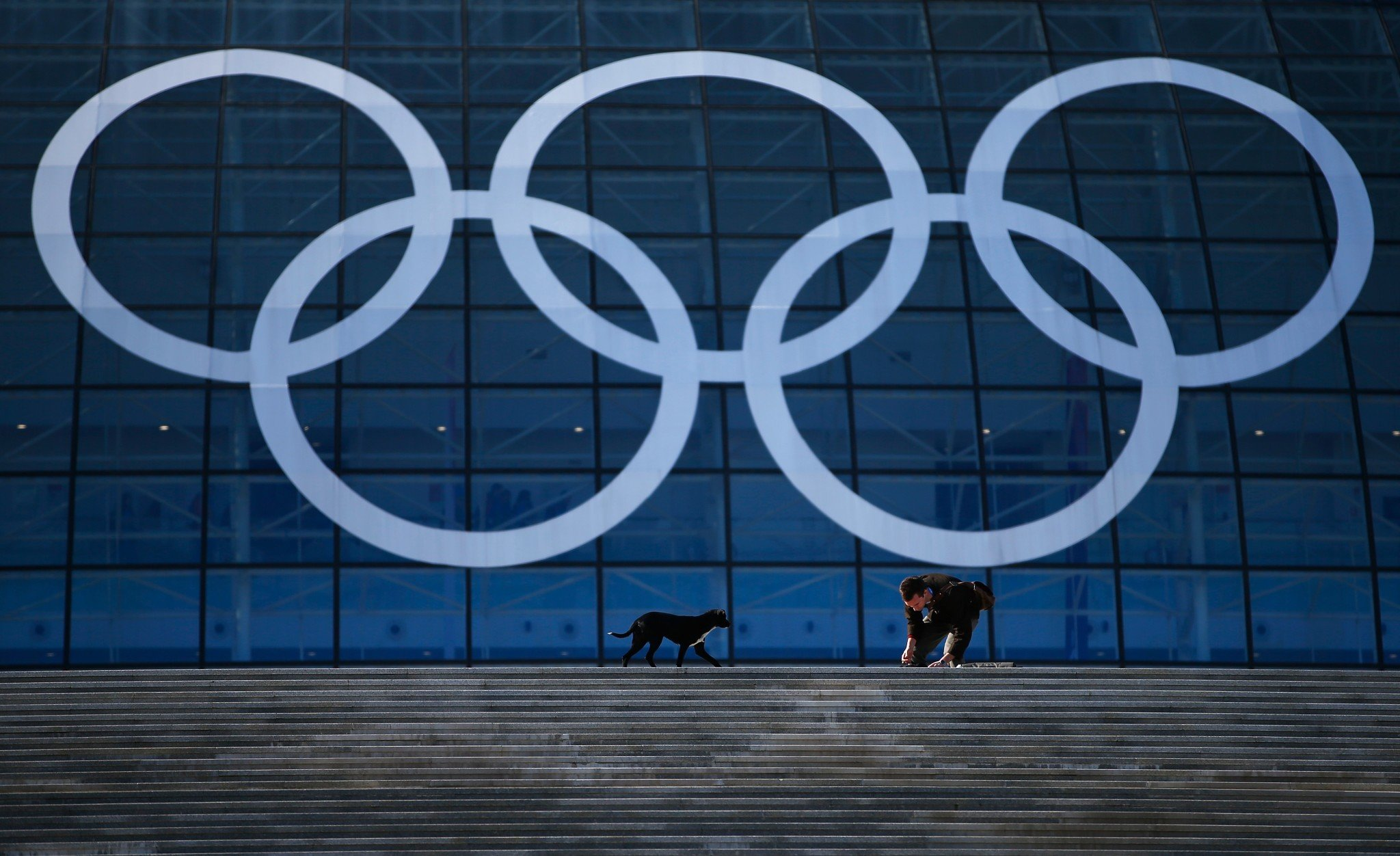 A stray dog approaches a Russian worker in front of the Olympic rings before the Sochi 2014 Winter Olympics. (Getty)