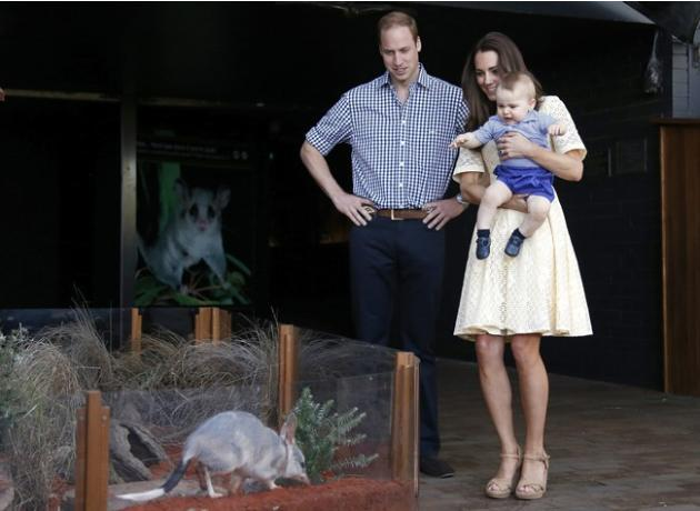 Britain's Kate, the Duchess of Cambridge, and her husband Britain's Prince William, watch as their son Prince George looks at an Australian animal called a Bilby, which has been named after th