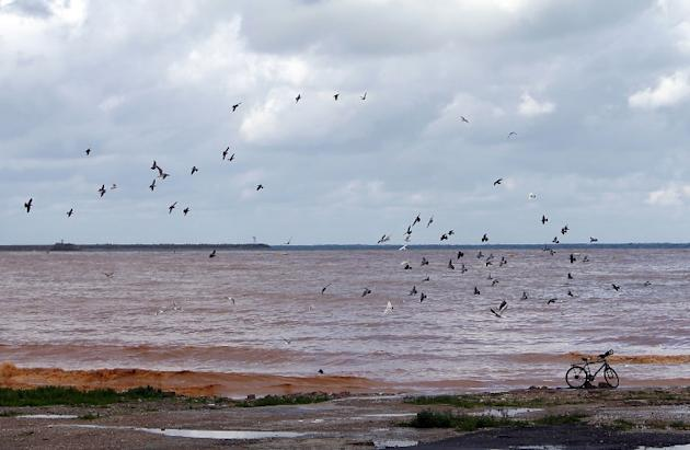 Seagulls fly over muddy water along the seafront close to the Lebanese capital Beirut on January 7, 2013, as the country experienced heavy rains and high wind overnight. AFP PHOTO/JOSEPH EID