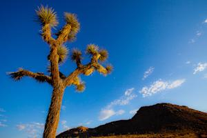 A Day Trip to Joshua Tree National Park