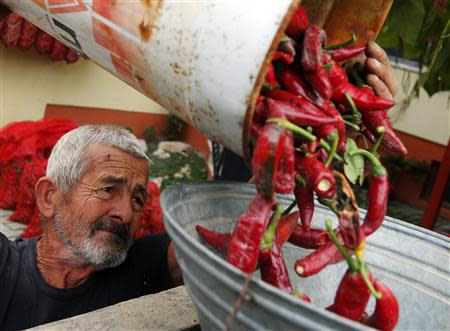 A paprika maker pours freshly picked peppers into a drying sock in Batya