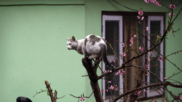 Mon Dieu! Oxford City's French keeper falls out of tree trying to save cat