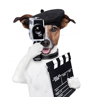 Is Your Business Missing a Video Marketing Strategy? image movie director dog