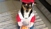 This pup is the cutest pizza delivery boy