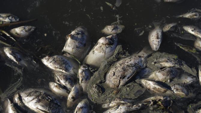 Brazil Olympic Park Dead Fish