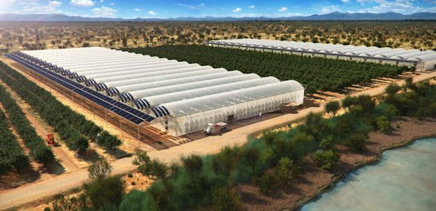 The 'Sahara Forest Project' uses specially-built greenhouses that turn salt water into fresh water using solar power, enabling crops to be grown in deserts. Photo: Climate Week