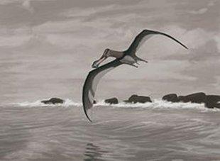 新娘禮車新疆哈密發現大量翼龍化石