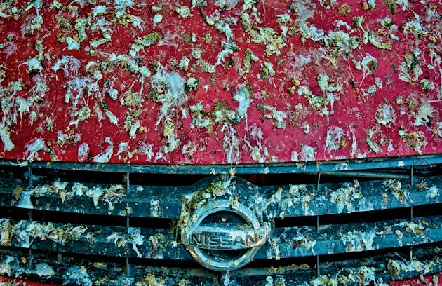 This red Nissan found itself on the wrong end of some avian attention. Image: Britt Runyon Photography, Flickr.