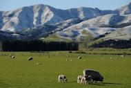 File photo shows snow capped mountains near Hanmer Springs on New Zealand's South Island. Researchers have discovered New Zealand's earthquake-prone landscape is even more unstable than previously thought, recording deep tremors lasting up to 30 minutes on its biggest fault line