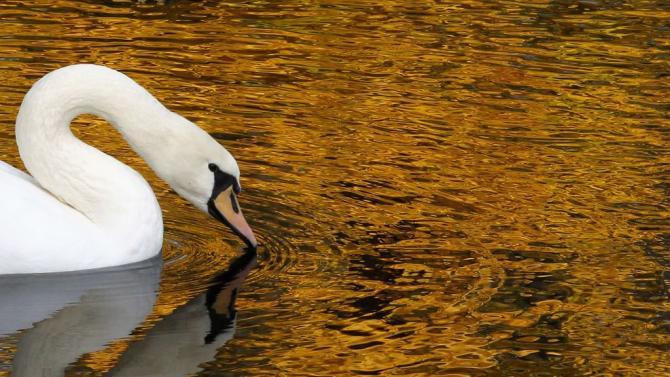 Travel Russia Swan Lake