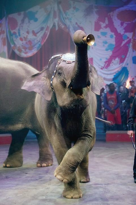 FILE - In this Feb. 19, 2015 file photo, four-year-old Asian elephant April rings bell during Ringling Bros. and Barnum & Bailey Circuspre-show at Knoxville Civic Coliseum, Knoxville, Tenn.  The circu