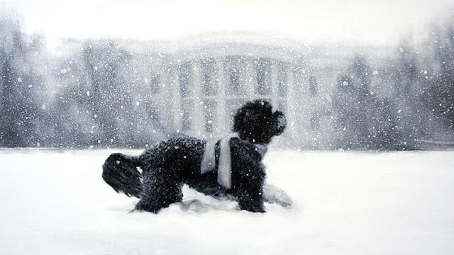 Obama Dog Bo Graces White House Holiday Card