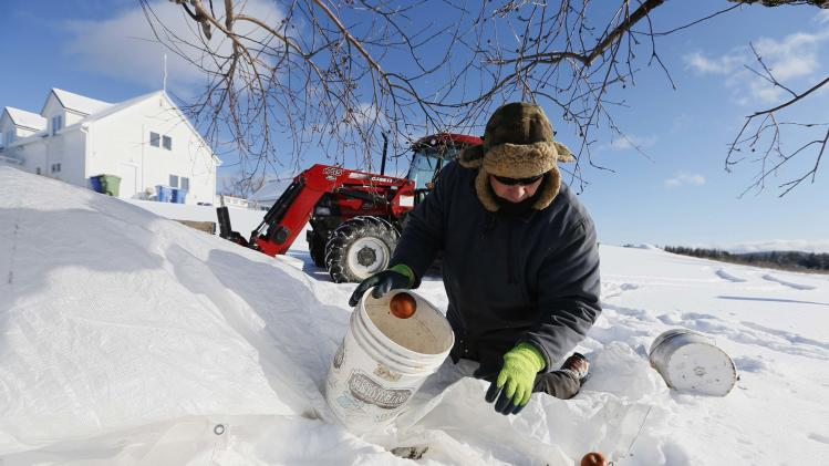 Orchard Manager Gilles Drille gathers apples for the ice harvest to make ice cider on the 430-acre apple orchard and cidery at Domaine Pinnacle in Frelighsburg, Quebec