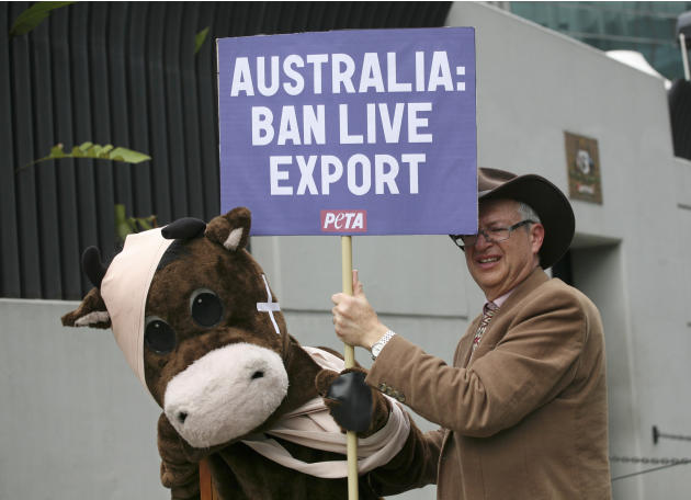 Activists of the animal rights group People for Ethical Treatment of Animals (PETA), one of them wearing a costume of injured cow, display a poster as they staged a protest against the export of live