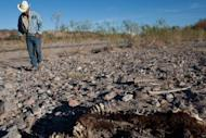 Mexican farmer Ever Mendoza walks next to a carcass in Satevo, Chihuahua state in 2011. 2011 saw historic droughts in East Africa, the southern US and northern Mexico