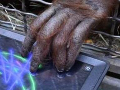 Apps for Apes: Zoos Turn to Tablets to Keep Animals Engaged