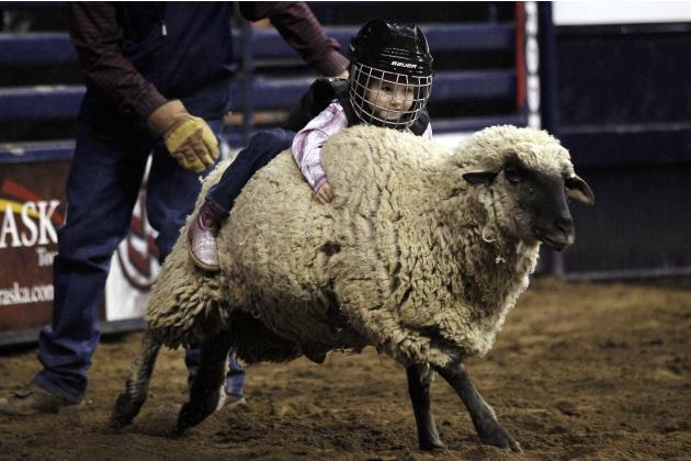 "Haley Walker hangs onto a sheep in the ""Mutton Bustin'"" competition at the 108th National Western Stock Show in Denver"