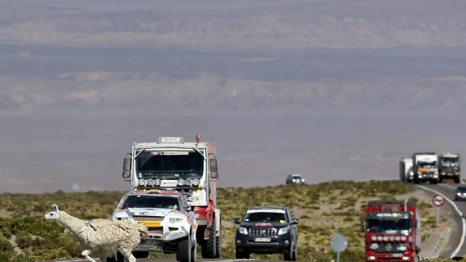 An alpaca crosses the road as drivers wait in their vehicles during the untimed 7th stage of the 2013 Dakar Rally from Calama to Salta