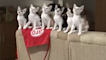 Six kittens moving their heads in sync is the cutest thing