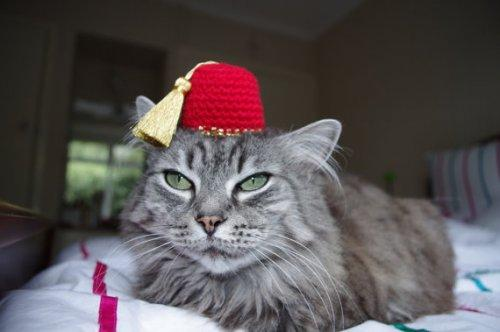 7. For the Shriner cat