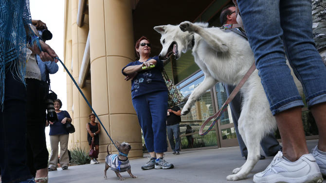 "A Chihuahua named ""Little Man,"" left, holds his ground as a Husky named ""Bree"" wants to play in front of Maricopa County Superior Court as the crowd of spectators grows waiting for a verdict in the Jodi Arias murder trial, Tuesday, May 7, 2013, in Phoenix. (AP Photo/Ross D. Franklin)"