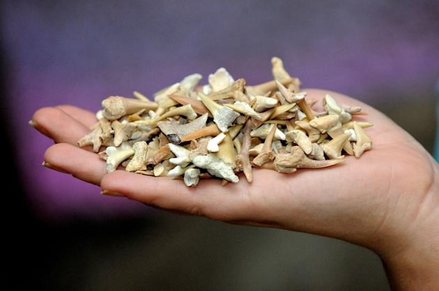 Find: The shark teeth had accumulated over 23 years (Caters)