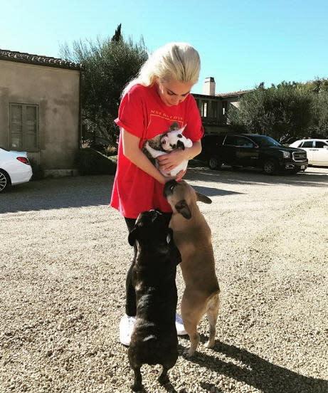 <p>二、女神卡卡(Lady GaGa):無獨有偶的,同樣演出《一個巨星的誕生》女主角的女神卡卡也是愛狗一族,經常在IG放上與狗兒相處的生活照,也會帶狗狗一起出席活動。在狗狗的面前,女神卡卡完全就是個好媽媽。(圖:女神卡卡IG) </p>