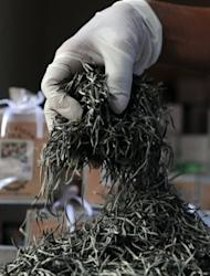 In this picture, taken on June 26, a Sri Lankan teamaker is seen preparing virgin white tea at a factory shop in Ahangama, some 140km south of Colombo. Sri Lanka is known for its exotic tea and is a top exporter of the commodity, but the industry is deeply divided over plans to boost earnings by importing cheaper tea for blending and re-export