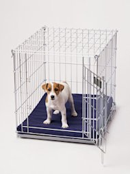 jack russell terrier in crate