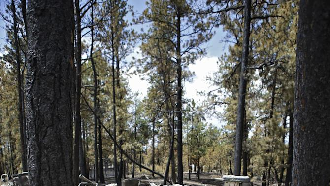 A burned home is viewed between two burned trees in the Black Forest wildfire area north of Colorado Springs, Colo., on Monday, June 17, 2013. Over 470 homes burned in the wildfire that started last Tuesday. (AP Photo/Ed Andrieski)