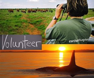 volunteer animals projects vacations