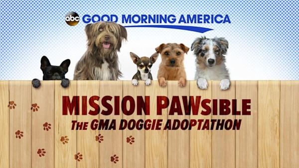 Good Morning America View Your Deal : Gma doggie adopt a thon list of participating shelters