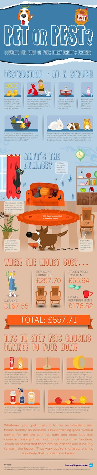 Pet or Pest? Infographic image 8808985100318resize